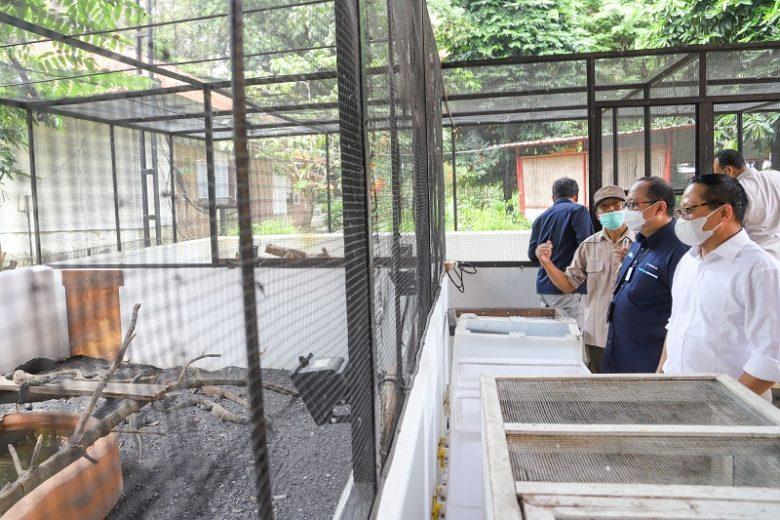 Kebun Binatang Surabaya (KBS) | Dok. Pelindo III