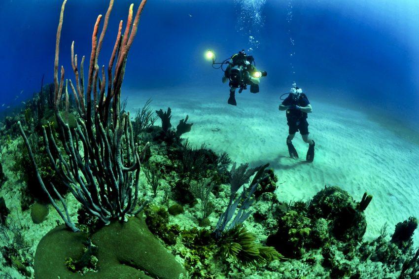 Ilustrasi olahraga diving atau menyelam di bawah air | dok/photo: pexels /Bicara Indonesia
