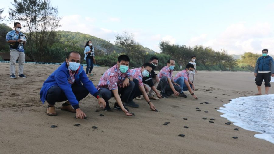 Pelepasan ribuan ekor tukik berlangsung di Pantai Taman, Kabupaten Pacitan | dok/photo: Ist